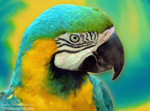 Ara yellow blue 2